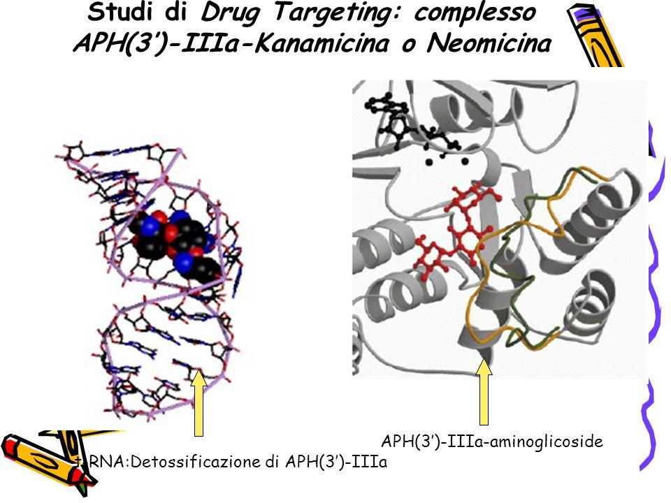 Studi di Drug Targeting: complesso APH(3')-IIIa-Kanamicina o Neomicina