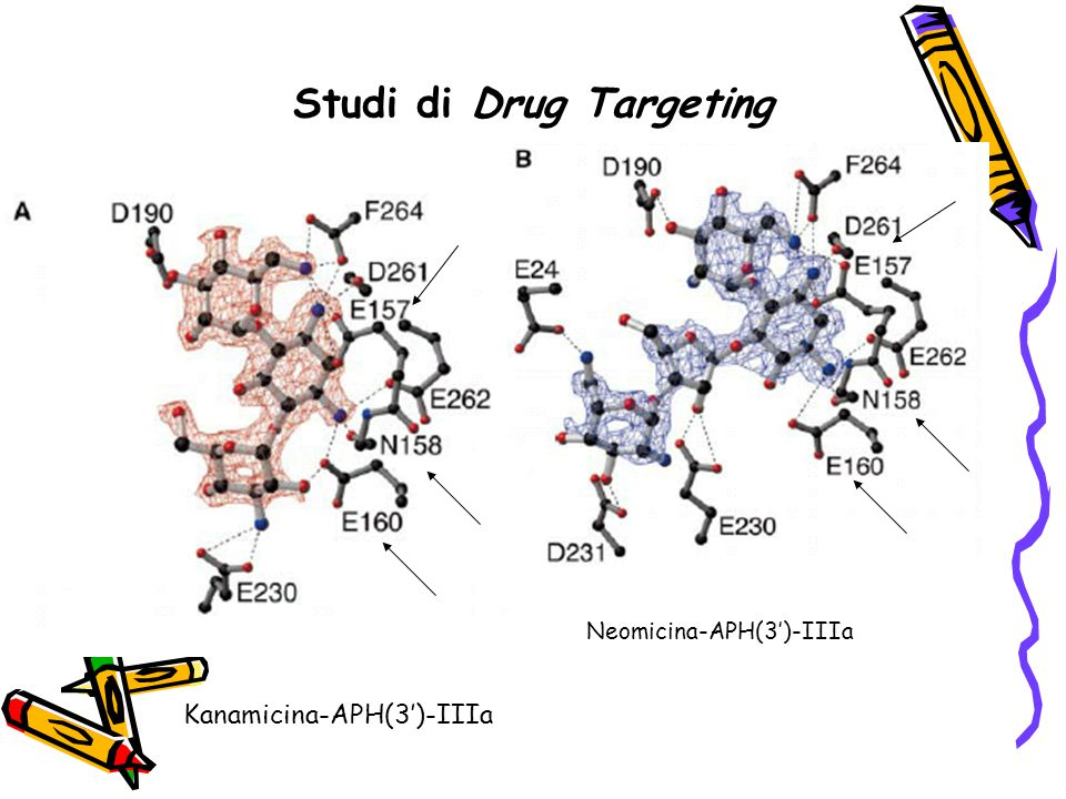 Studi di Drug Targeting