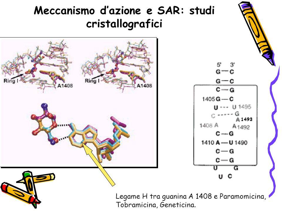 Meccanismo d'azione e SAR: studi cristallografici