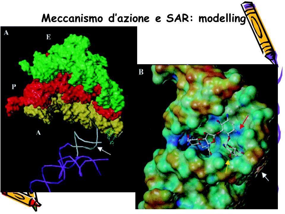 Meccanismo d'azione e SAR: modelling