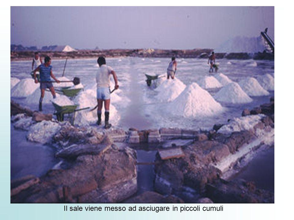 Il sale viene messo ad asciugare in piccoli cumuli