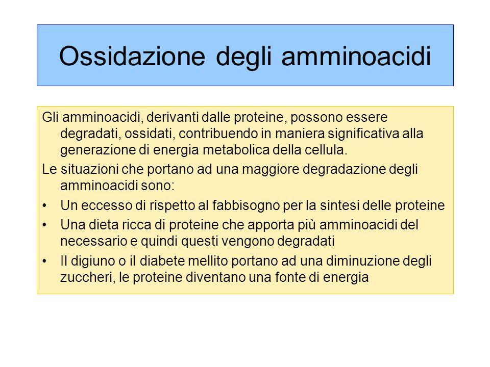 Ossidazione degli amminoacidi