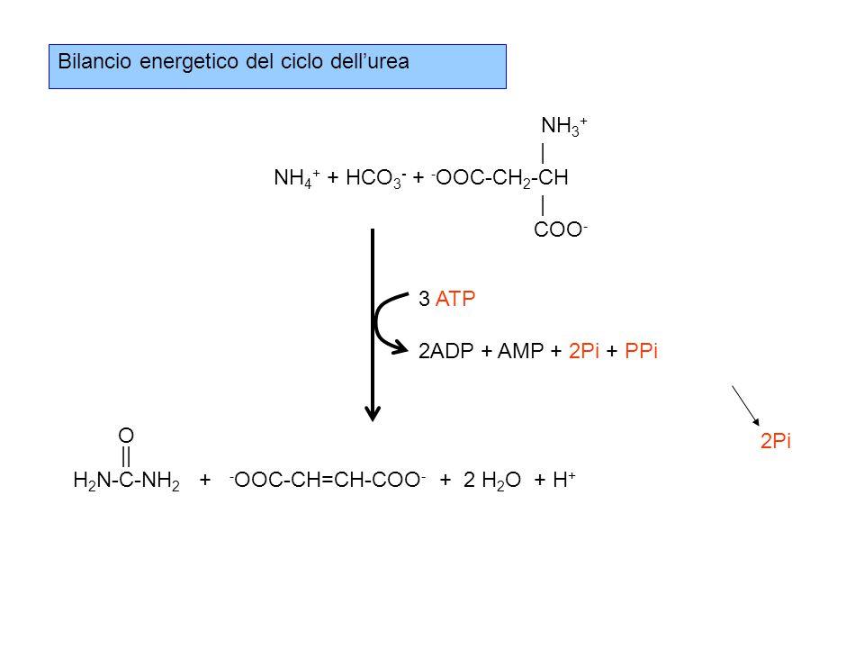 Bilancio energetico del ciclo dell'urea