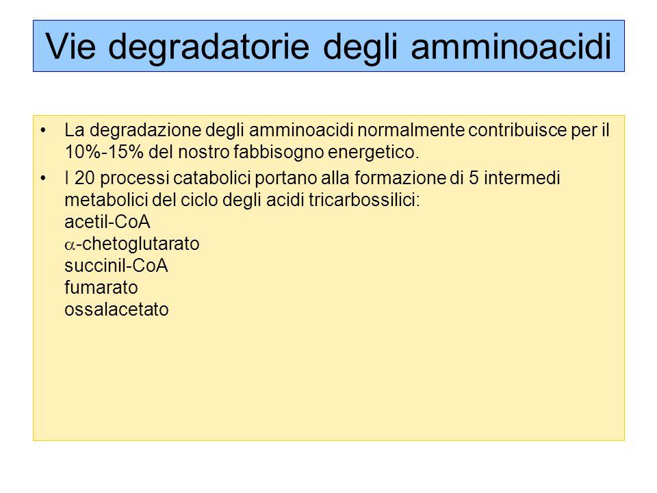 Vie degradatorie degli amminoacidi