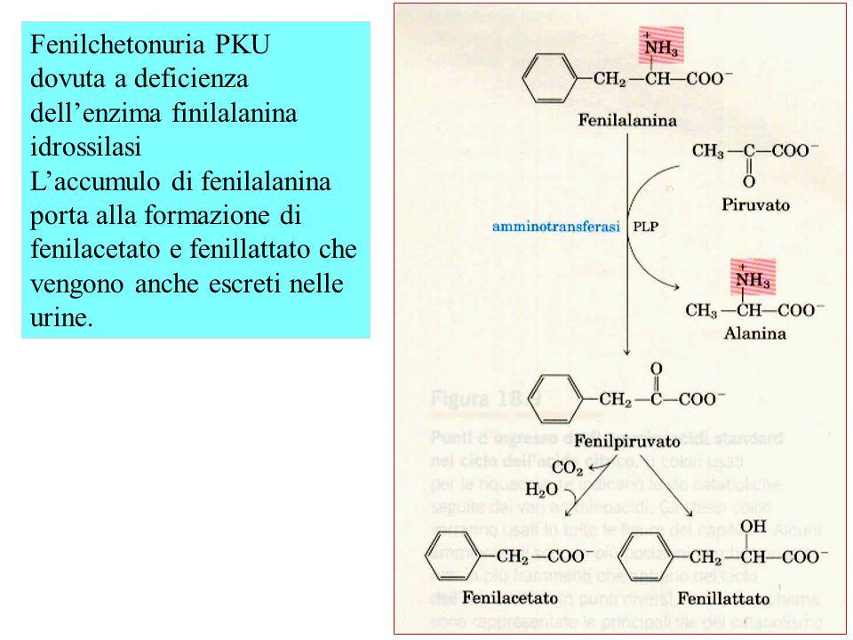 Fenilchetonuria PKU dovuta a deficienza dell'enzima finilalanina idrossilasi.