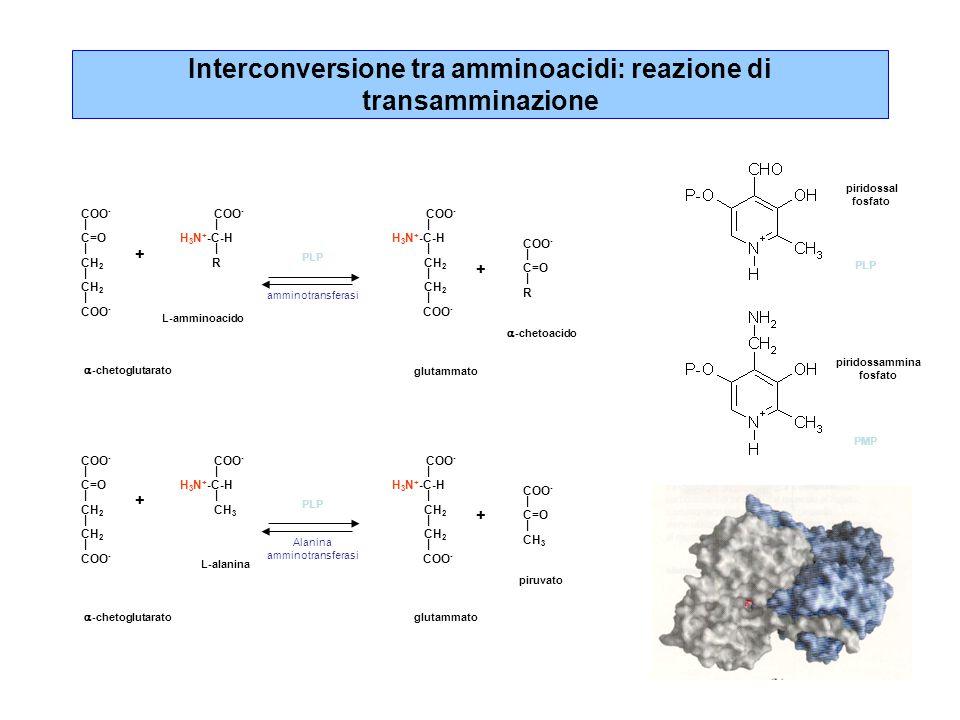 Interconversione tra amminoacidi: reazione di transamminazione