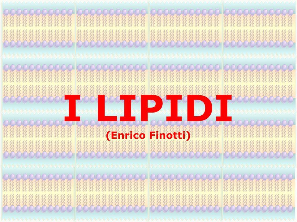 I LIPIDI (Enrico Finotti)