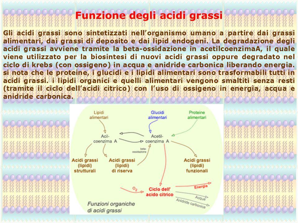 Funzione degli acidi grassi