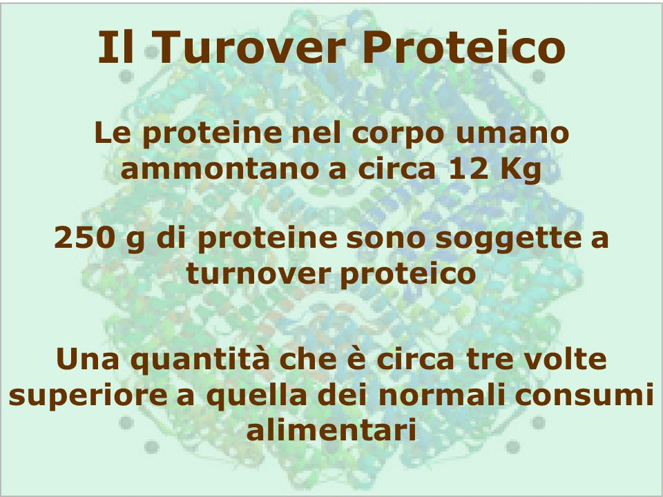 Il Turover Proteico Le proteine nel corpo umano ammontano a circa 12 Kg. 250 g di proteine sono soggette a turnover proteico.