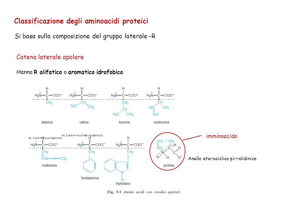 Classificazione degli aminoacidi proteici