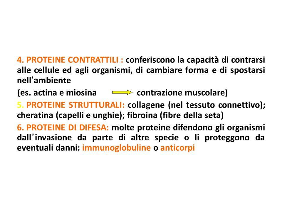 PROTEINE CONTRATTILI : conferiscono la capacità di contrarsi alle cellule ed agli organismi, di cambiare forma e di spostarsi nell'ambiente