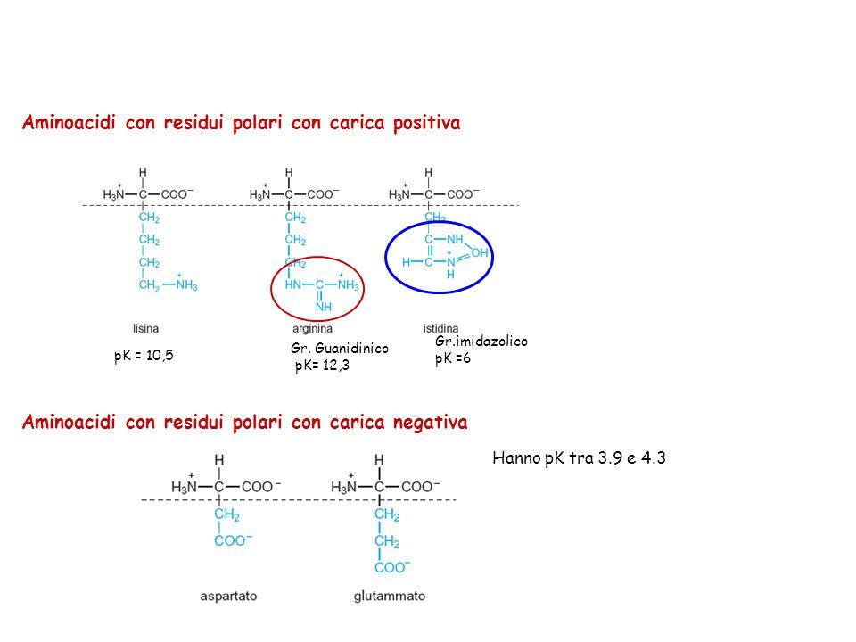 Aminoacidi con residui polari con carica positiva
