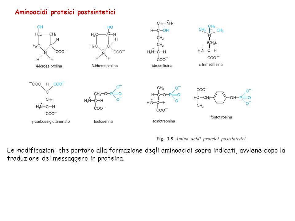 Aminoacidi proteici postsintetici