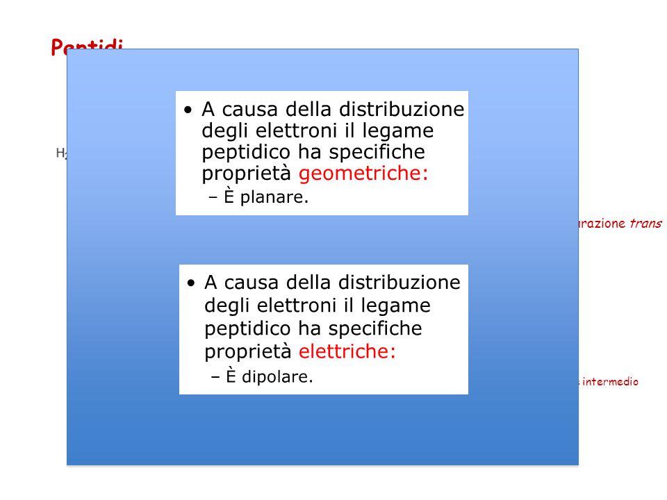Peptidi Legame carbammidico o peptidico Configurazione trans