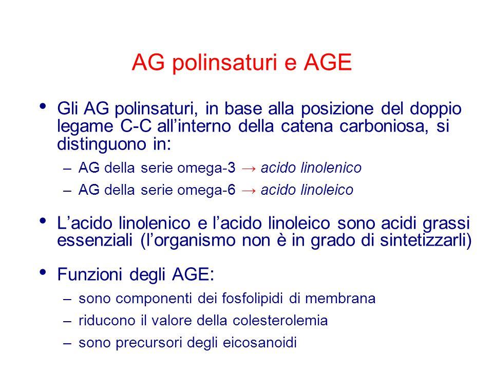 AG polinsaturi e AGE Gli AG polinsaturi, in base alla posizione del doppio legame C-C all'interno della catena carboniosa, si distinguono in: