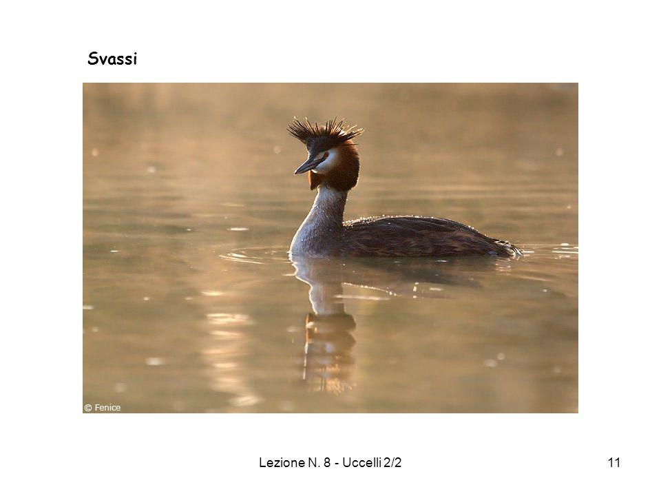 Svassi Lezione N. 8 - Uccelli 2/2