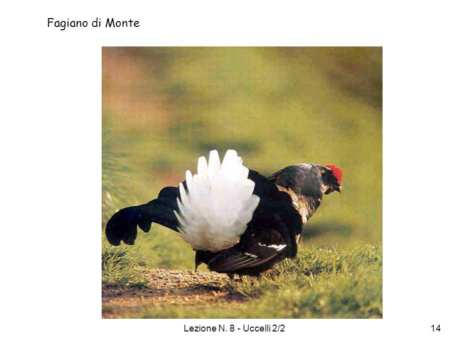 Fagiano di Monte Lezione N. 8 - Uccelli 2/2