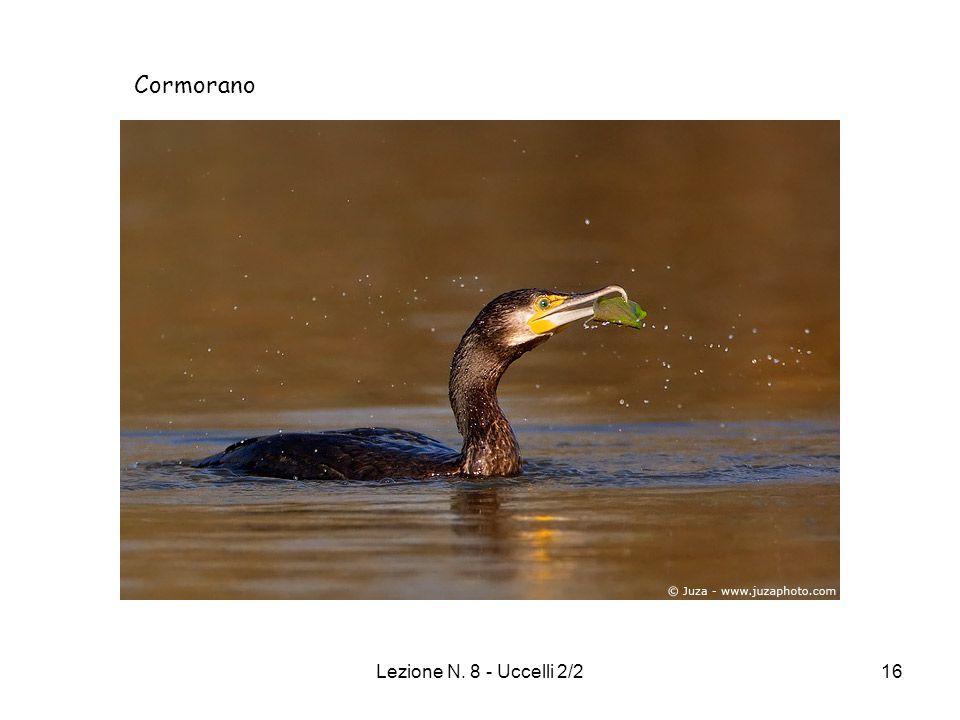 Cormorano Lezione N. 8 - Uccelli 2/2