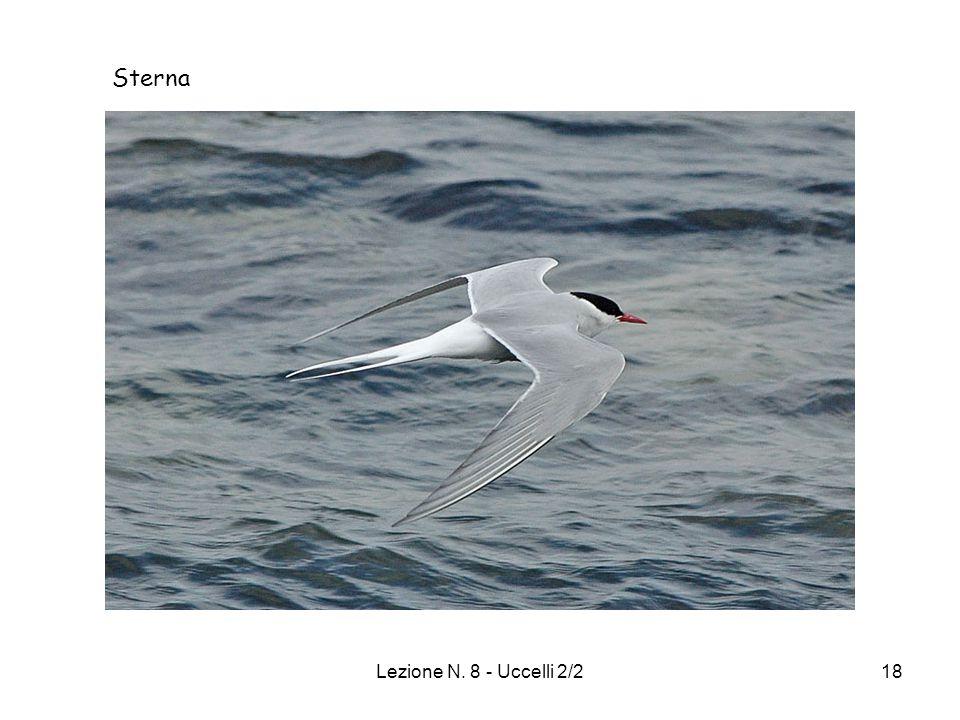 Sterna Lezione N. 8 - Uccelli 2/2