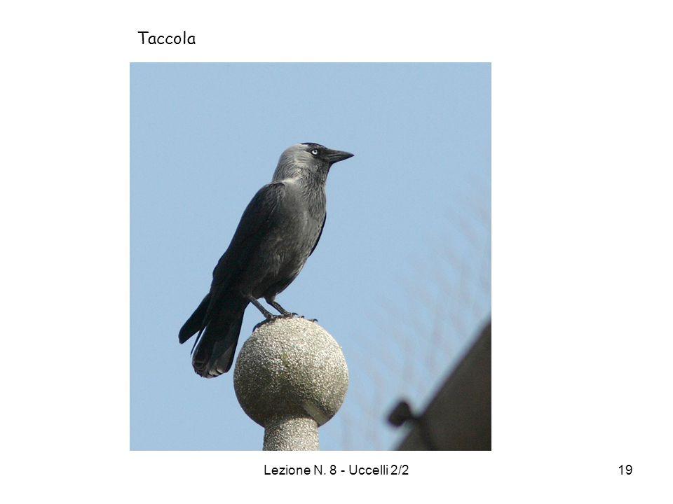 Taccola Lezione N. 8 - Uccelli 2/2