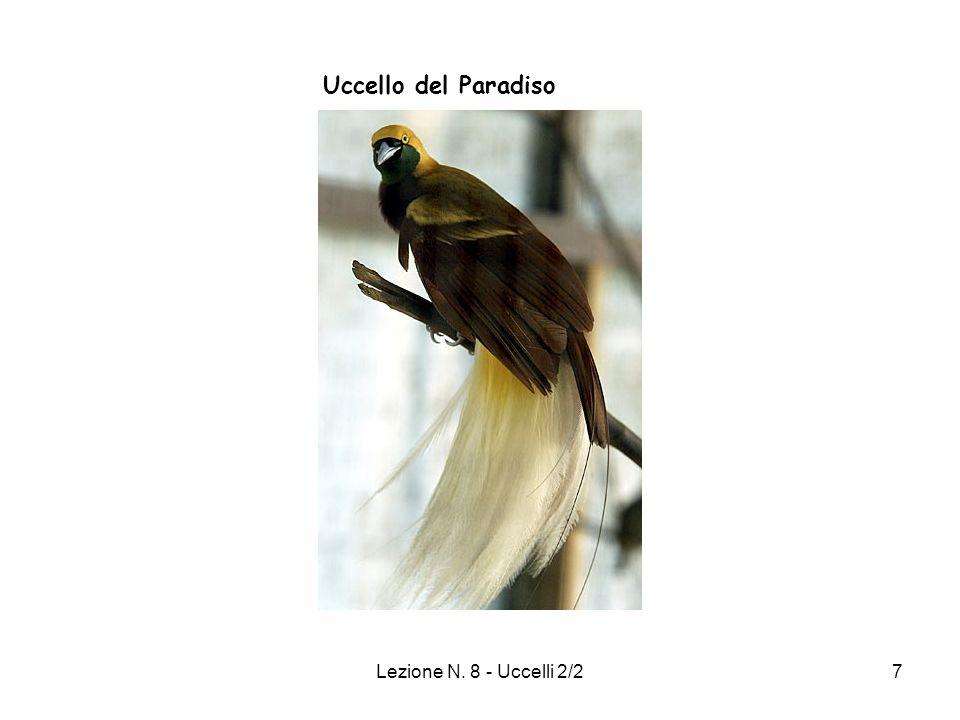 Uccello del Paradiso Lezione N. 8 - Uccelli 2/2