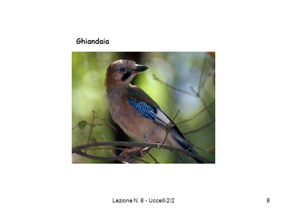 Ghiandaia Lezione N. 8 - Uccelli 2/2