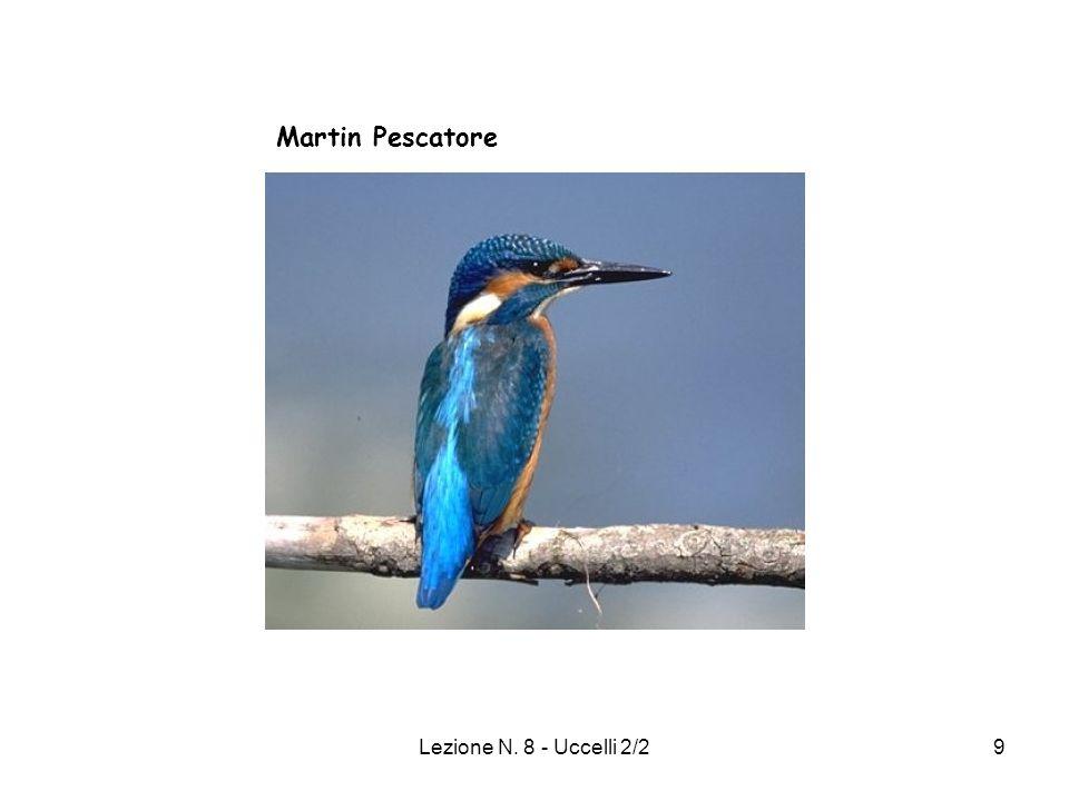 Martin Pescatore Lezione N. 8 - Uccelli 2/2