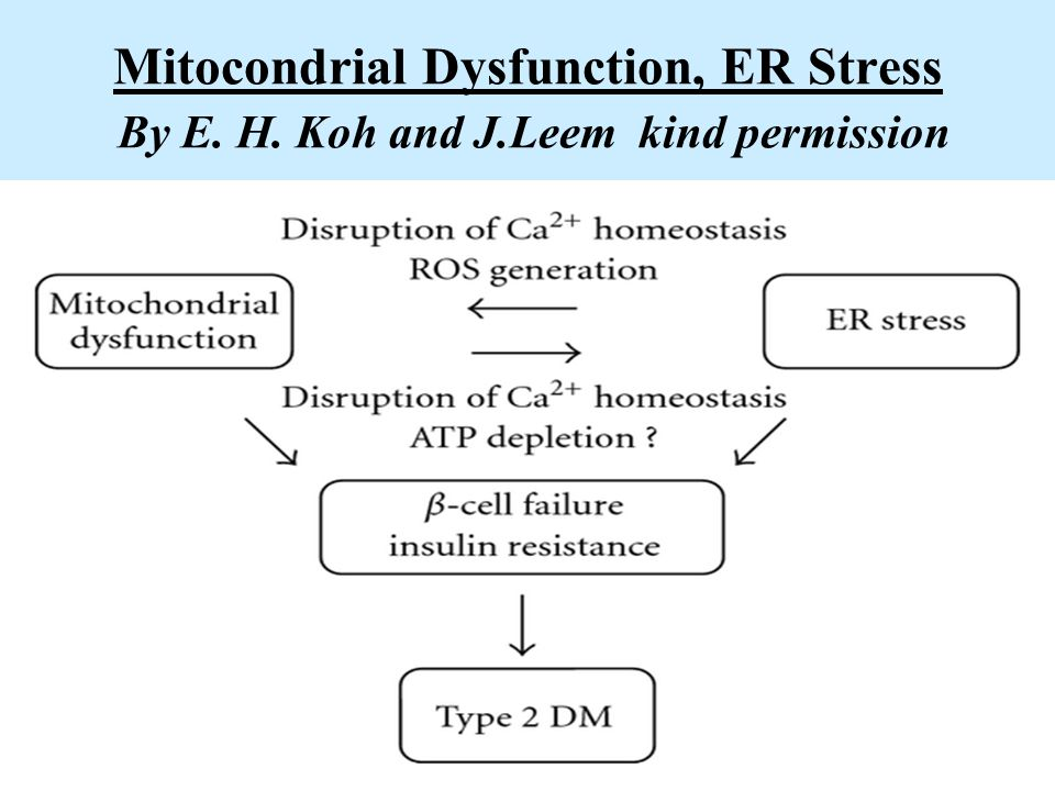 Mitocondrial Dysfunction, ER Stress By E. H. Koh and J