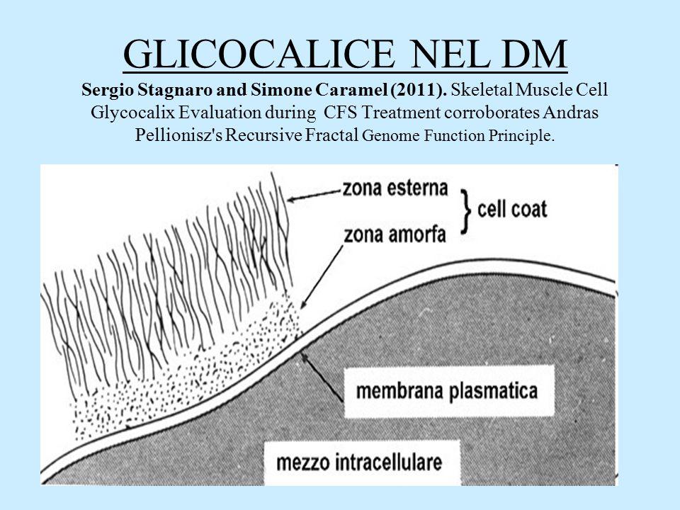 GLICOCALICE NEL DM Sergio Stagnaro and Simone Caramel (2011)
