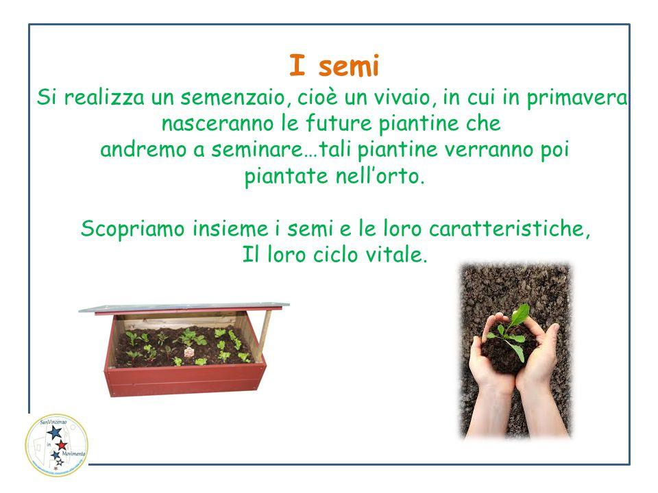 I semi Si realizza un semenzaio, cioè un vivaio, in cui in primavera