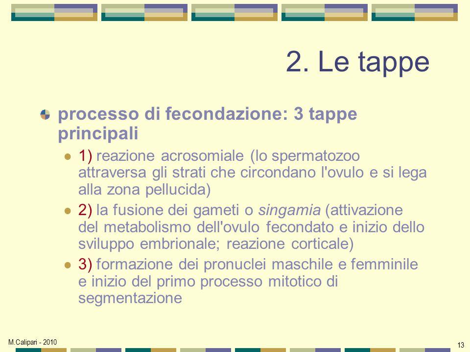 2. Le tappe processo di fecondazione: 3 tappe principali