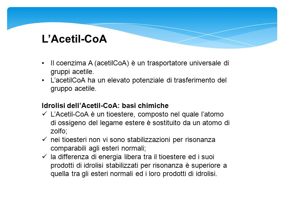L'Acetil-CoA Il coenzima A (acetilCoA) è un trasportatore universale di gruppi acetile.