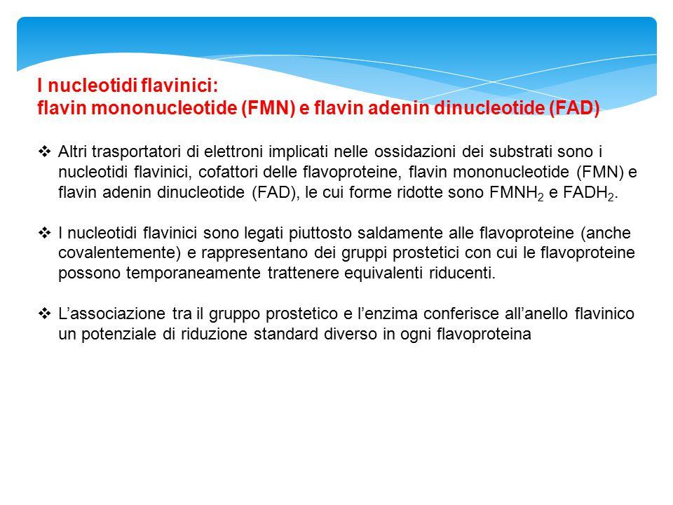 I nucleotidi flavinici: