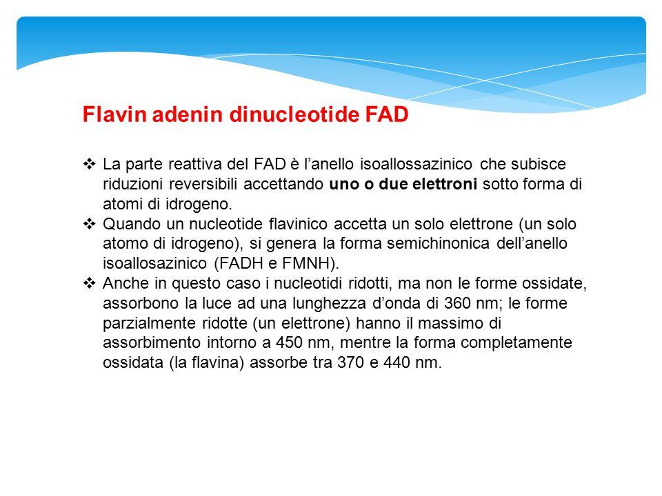 Flavin adenin dinucleotide FAD