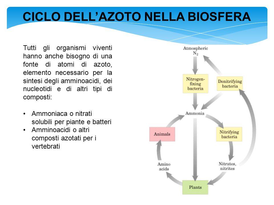 CICLO DELL'AZOTO NELLA BIOSFERA