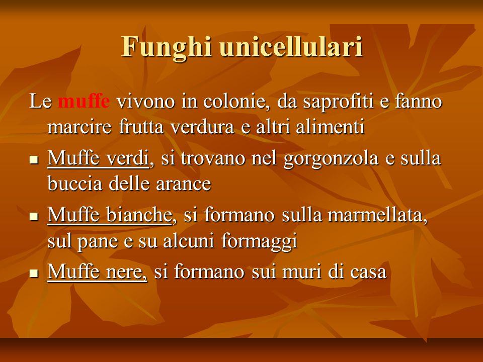 Funghi unicellulari Le muffe vivono in colonie, da saprofiti e fanno marcire frutta verdura e altri alimenti.