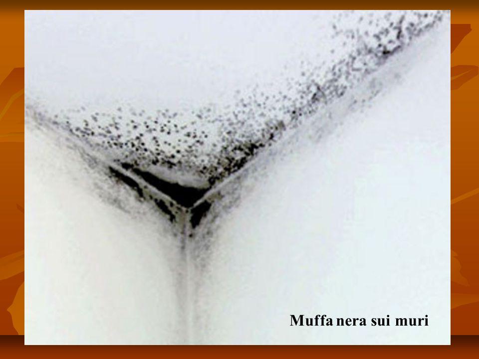 Muffa nera sui muri