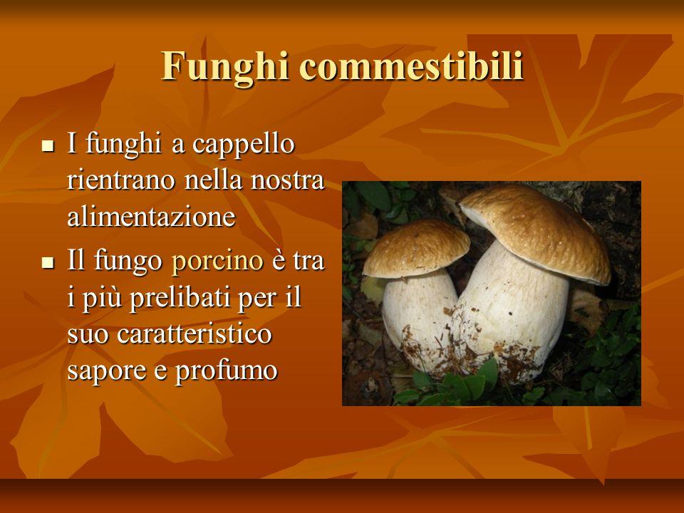 Funghi commestibili I funghi a cappello rientrano nella nostra alimentazione.