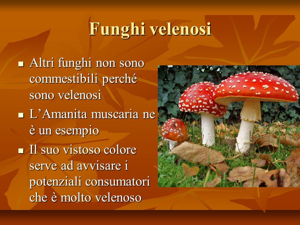 Funghi velenosi Altri funghi non sono commestibili perché sono velenosi. L'Amanita muscaria ne è un esempio.