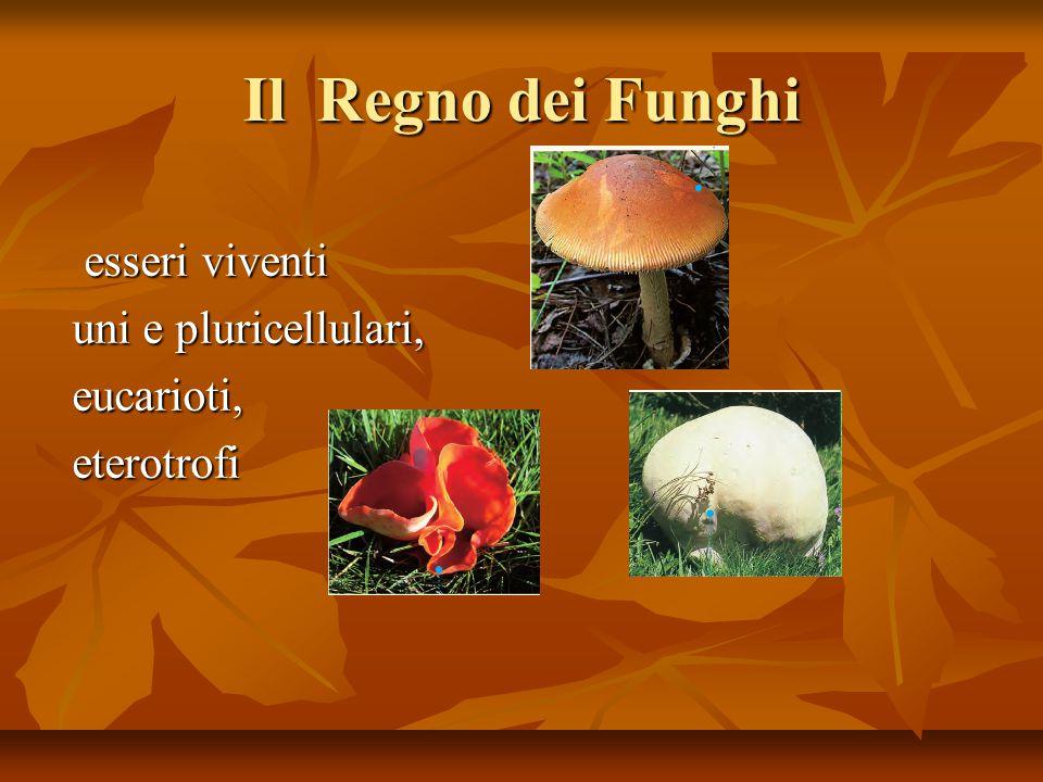 Il Regno dei Funghi esseri viventi uni e pluricellulari, eucarioti,
