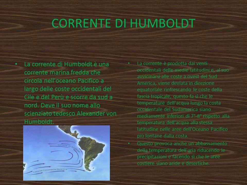 CORRENTE DI HUMBOLDT