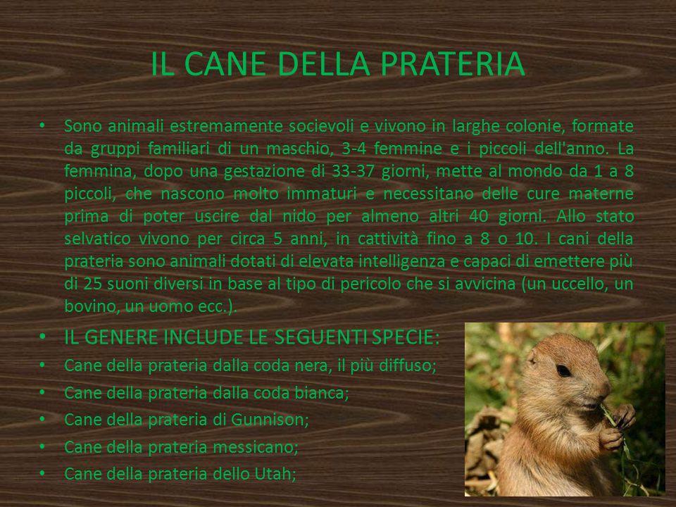 IL CANE DELLA PRATERIA IL GENERE INCLUDE LE SEGUENTI SPECIE: