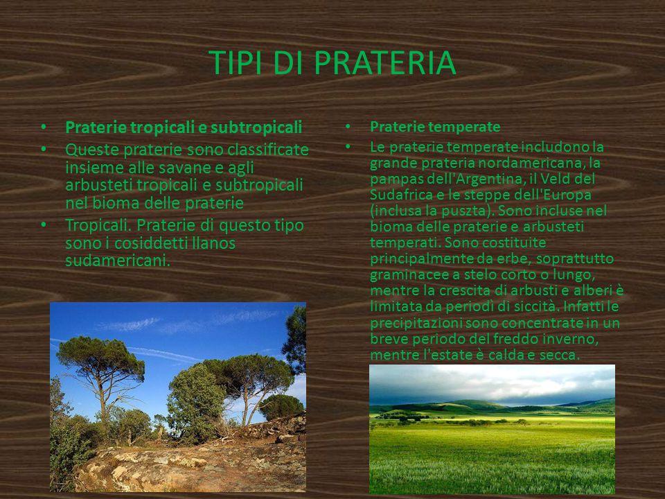 TIPI DI PRATERIA Praterie tropicali e subtropicali