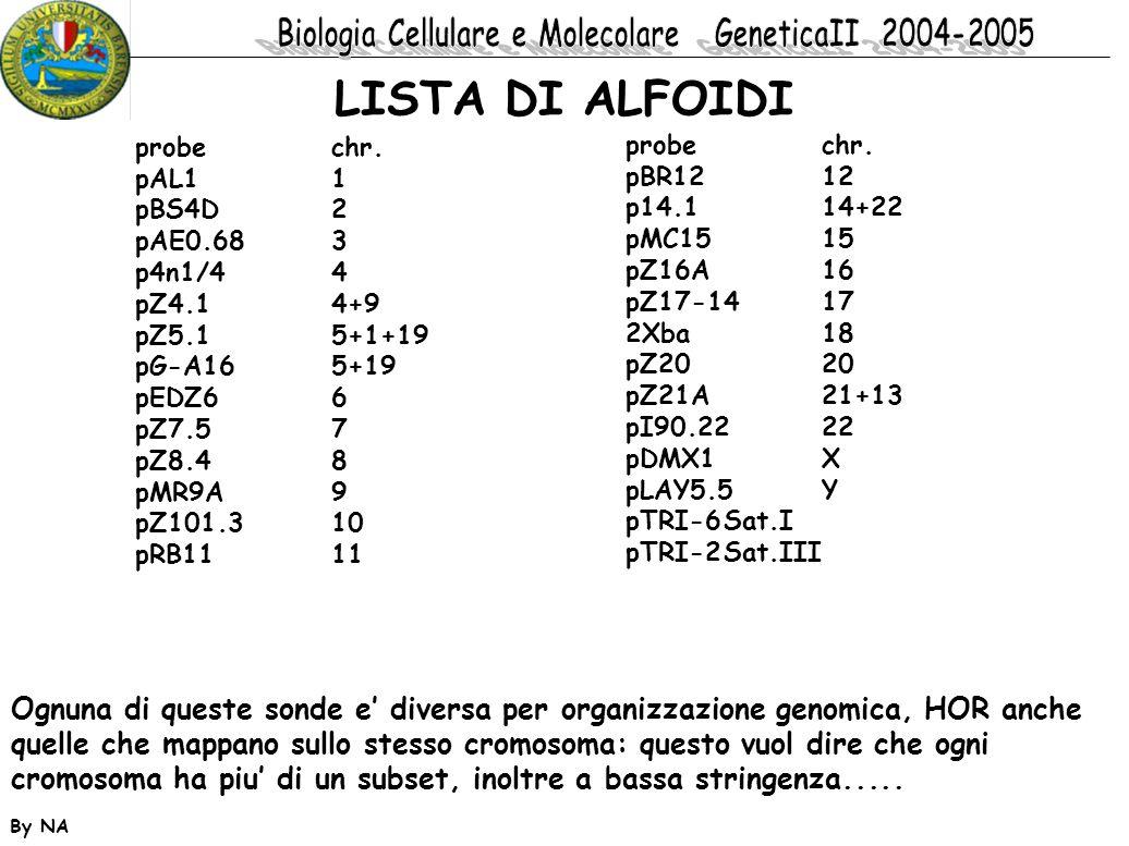 LISTA DI ALFOIDI probe chr. pAL1 1. pBS4D 2. pAE0.68 3. p4n1/4 4. pZ4.1 4+9.