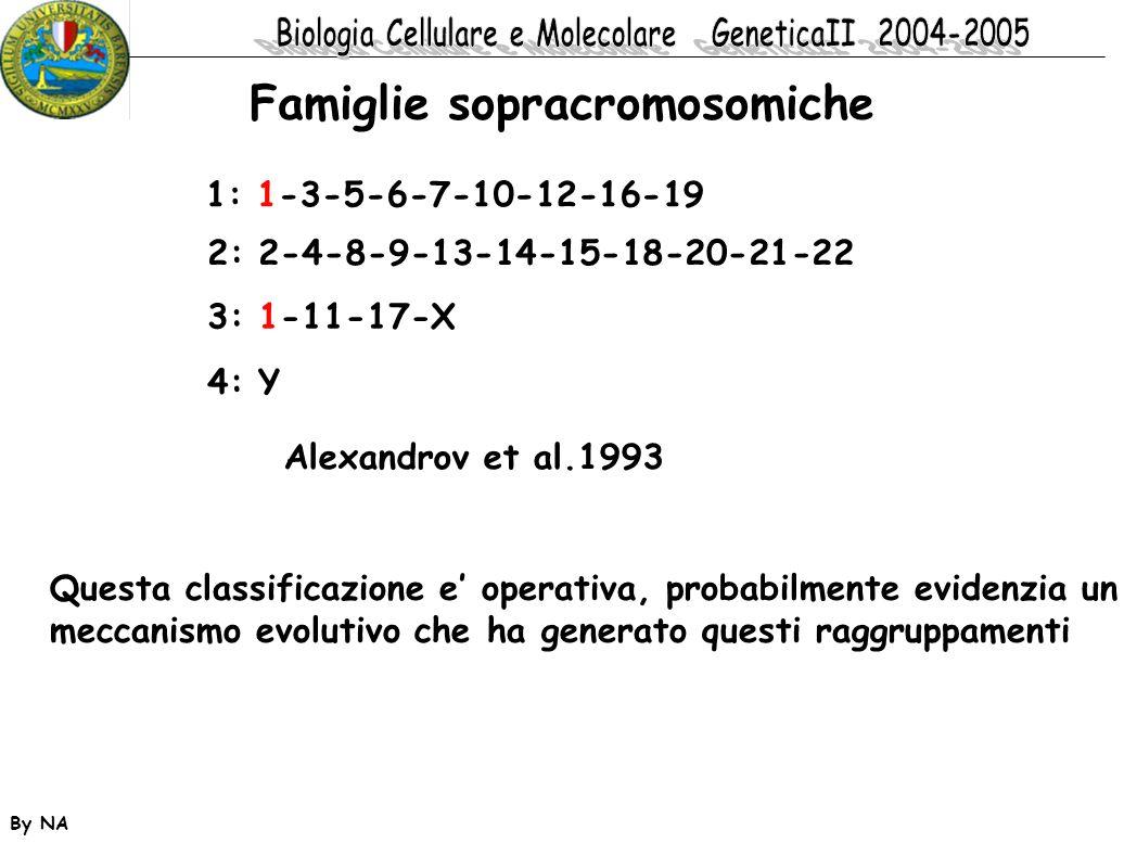 Famiglie sopracromosomiche
