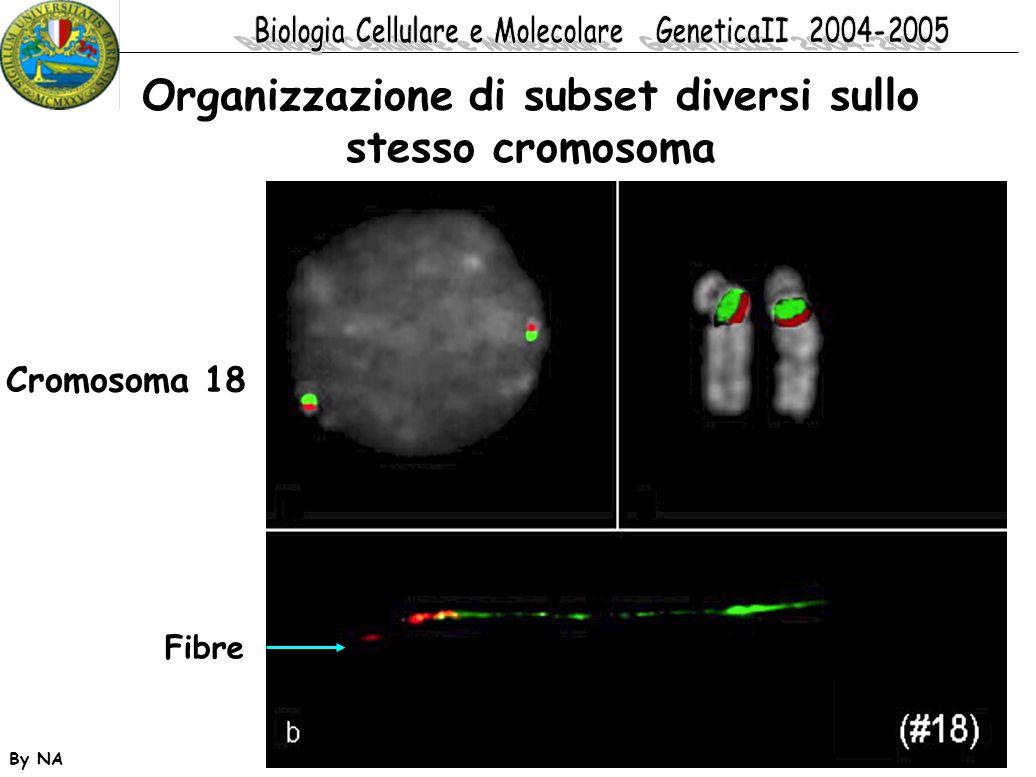 Organizzazione di subset diversi sullo stesso cromosoma