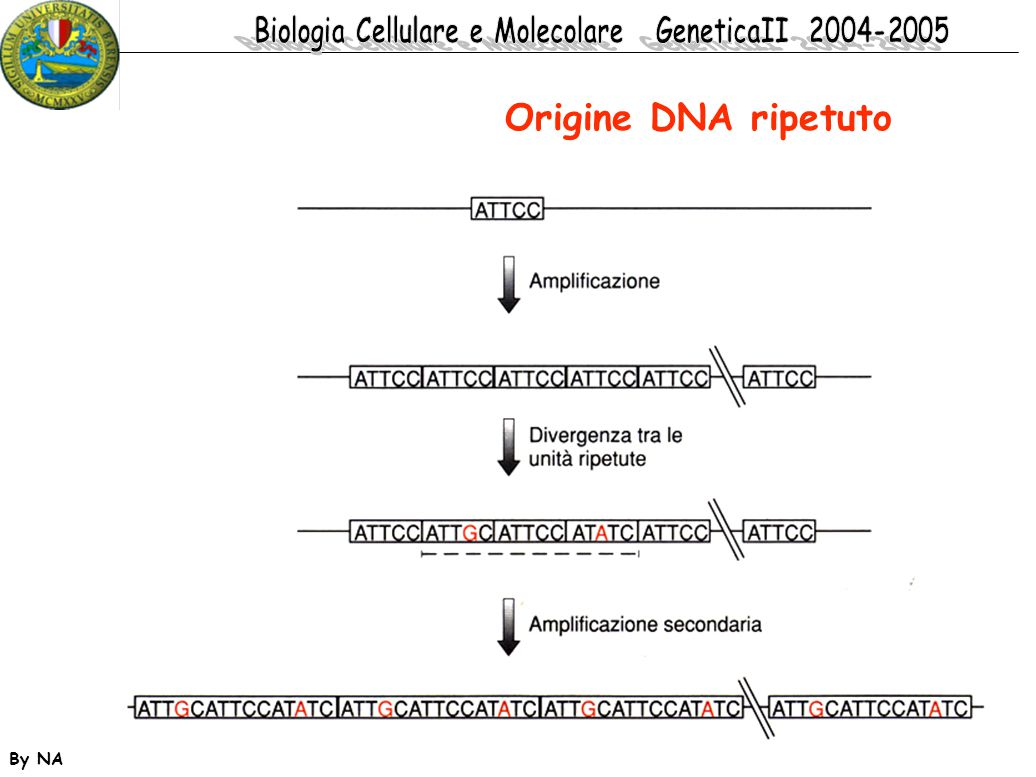 Origine DNA ripetuto By NA