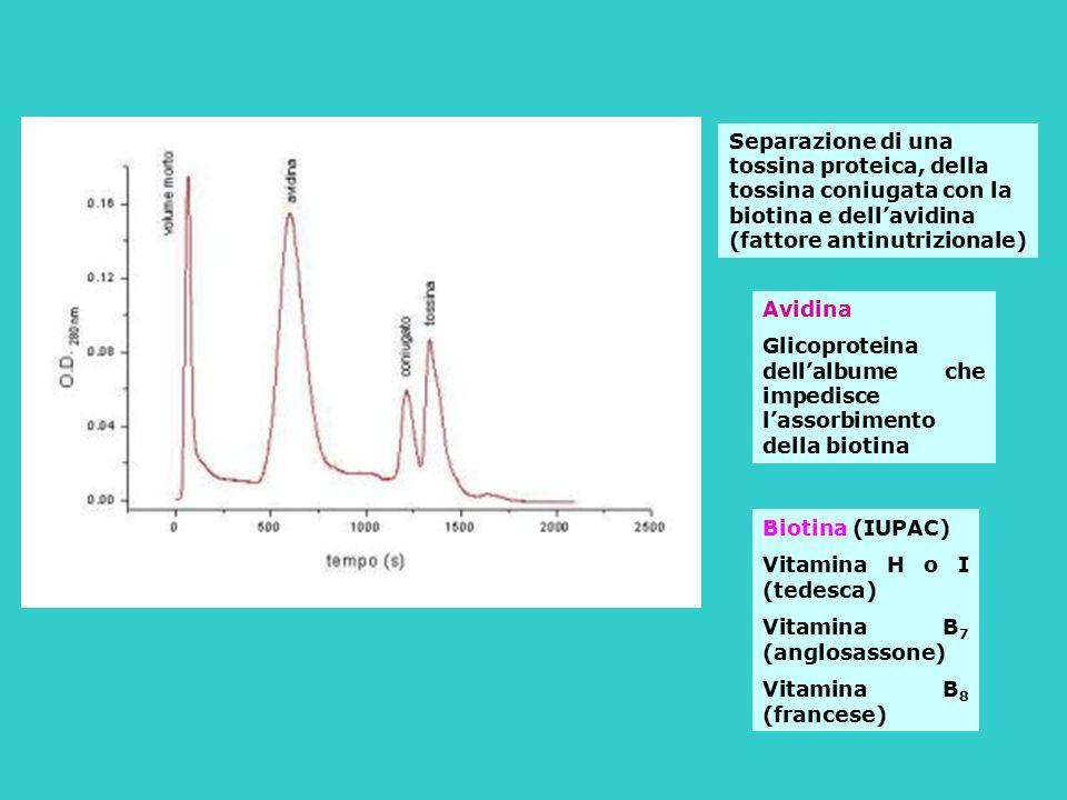 Separazione di una tossina proteica, della tossina coniugata con la biotina e dell'avidina (fattore antinutrizionale)