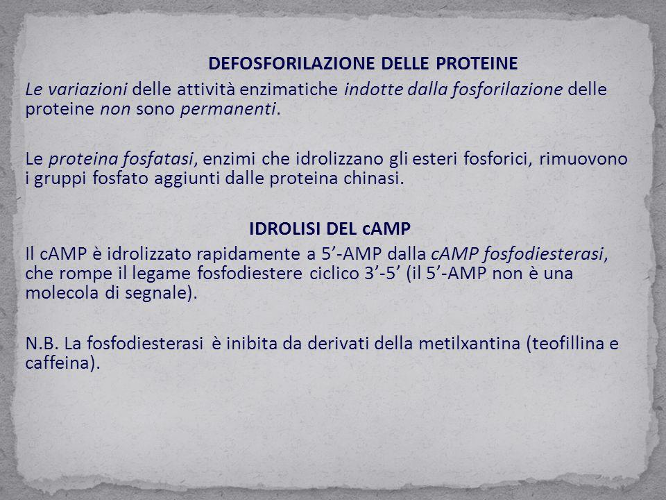 DEFOSFORILAZIONE DELLE PROTEINE
