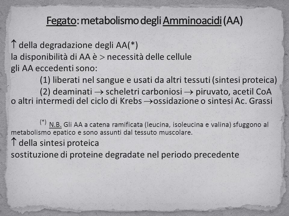 Fegato: metabolismo degli Amminoacidi (AA)